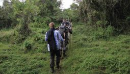 nature-walk-in-uganda