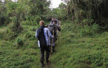 nature-walk-in-uganda